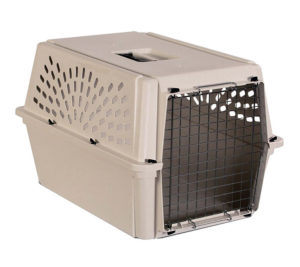 Pet carriers and owning a pet in spain